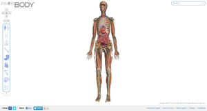 Zygote_Body_full_body_screenshot