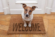 Dog on a welcome mat [HOLD for Computerworld's Best Places to Work in IT 2016]