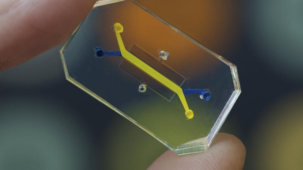 organ on a chip