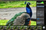 Luminar review: A serious challenger to the reigning pro apps for photo editing mastery