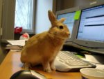 Bash Bunny: Big hacks come in tiny packages